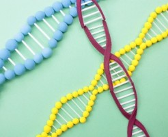 遺伝とダイエット