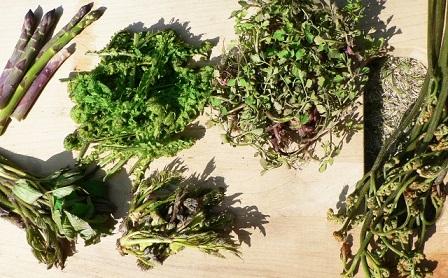 老廃物を流してむくみすっきり!春野菜のダイエット効果は凄い
