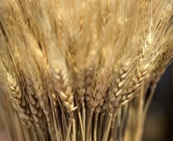 スーパー大麦