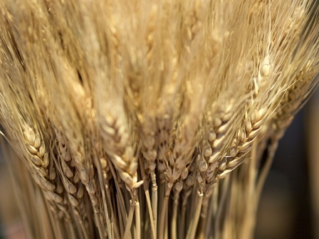 毎朝食べるだけで痩せる!と話題のスーパー大麦の効果とは?