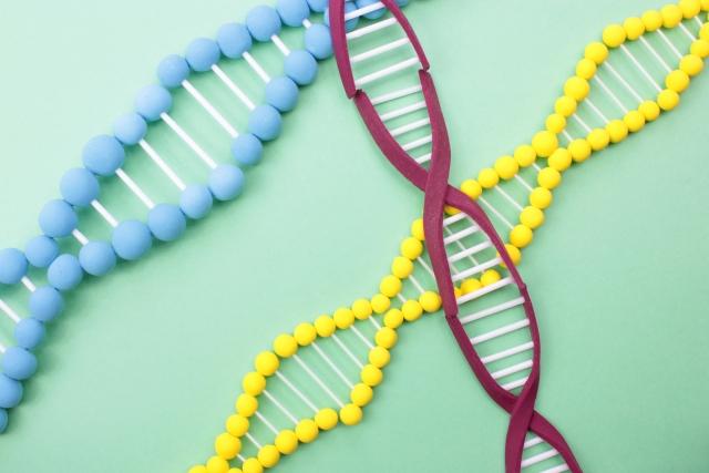 肥満遺伝子